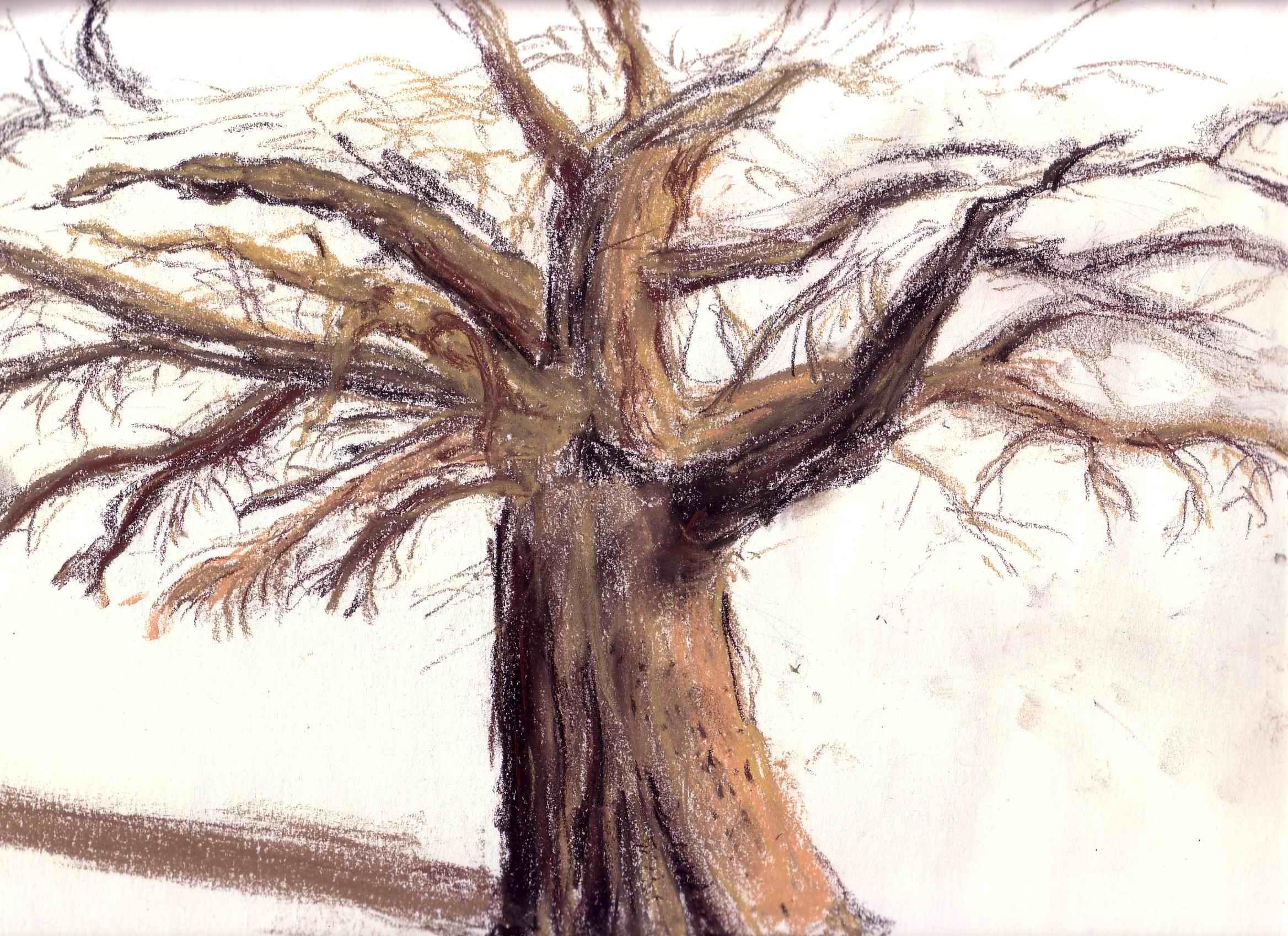 Au taf at l 39 ambre de chin - Dessin arbre nu ...